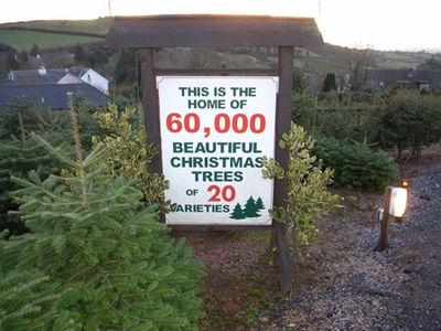 Marldon Christmas Tree Farm - Missing Fillmore: Marldon Christmas Tree Farm